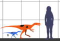 Stokesosaurus SIZE.png