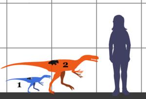 Stokesosaurus - Estimated size of juvenile South Dakota specimen (blue) and the Stokesosaurus holotype (orange), compared to a human.