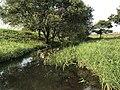 Stream in Yoshinogari Historical Park 3.jpg