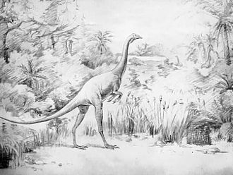 Struthiomimus - 1921 restoration of S. altus by Irwin S. Christman