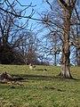 Studley Park - geograph.org.uk - 1595365.jpg