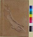 Study of the left hand of Mme de Pompadour MET 55.214.jpg