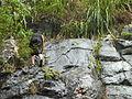 Subiendo por la piedra mojada en Buga natural.JPG