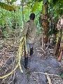 Sugarcane Farmer Harvesting.jpg