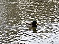 Sulphur Springs Walk (46300392485).jpg