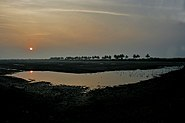 Sunset with Grey Herons, Egrets, Painted Storks & Black-headed Ibises gathering at Kolleru, AP W IMG 4225