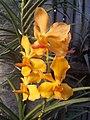 Suvarnabhumi Orchids Farm IMG 20160322 075829 (27412841706).jpg