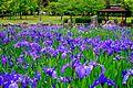 Suwa park - panoramio (1).jpg