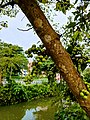 Swapbanagari 8.jpg