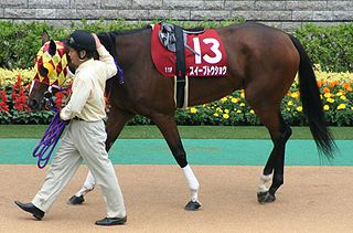 Sweep Tosho Japanese-bred Thoroughbred racehorse