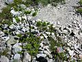 Swiss National Park 022.JPG