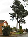 Tall Trees, Woodleigh Road, Sutton Coldfield - geograph.org.uk - 1634810.jpg