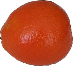 Tangelo fruit.jpg