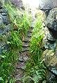 Tappoch broch stairs 093010.jpg