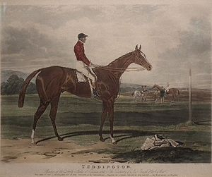 Teddington (horse) - Teddington depicted in an etching by Charles Hunt