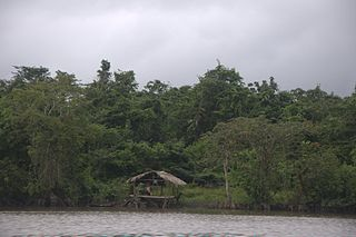 Waini River