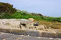 Tharros - Sardinia - Italy - 09.jpg