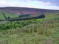 The Fellside east above Blakey Gill - geograph.org.uk - 893274.jpg