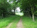 The North Downs Way in Skeats Wood - geograph.org.uk - 1325945.jpg