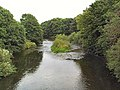 The River Aire near Rodley - geograph.org.uk - 43954.jpg