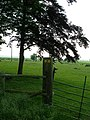 The footpaths meet and split - geograph.org.uk - 454424.jpg