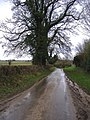 The road to Didmarton - geograph.org.uk - 308043.jpg