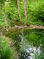 Thurweg Beaver pond.jpg