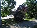 Tornparken, Sundbyberg, 2018d.jpg