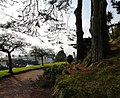 Torquay Road from Oldway Mansion gardens - geograph.org.uk - 696685.jpg