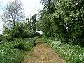 Track Near Woodeaton - geograph.org.uk - 428348.jpg
