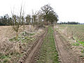 Track to Station Road, Hethersett - geograph.org.uk - 1744480.jpg