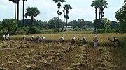 Kuzhalmannam... Harvesting Wikipedia
