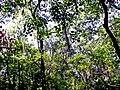 Tree Hill Nature Center01.jpg