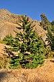 Tree at Mitchell Point Overlook 01.jpg