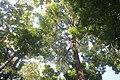 Tree top and sky.jpg