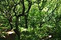 Trees on the Vans (9503).jpg