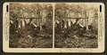 Trophies of the hunt in the Maine woods. (A deer hunters' camp showing men cooking and relaxing.), from Robert N. Dennis collection of stereoscopic views.png