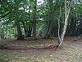 Tumulus at Graffham camp site - geograph.org.uk - 232296.jpg