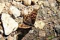Turda Gorges (4679054065).jpg