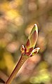 US-CA-YubaRiver-PurdonCrossing-Blossom-2012-04-15T14-40-23 v1.jpg