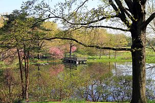 USA-NYC-Central Park-Turtle Pond0