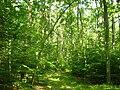 Ueckermuender-Heide-bei-Rothemuehl-30-06-2009-013.jpg