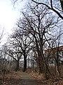 Uhříněves, památné duby u Říčanky (01).jpg
