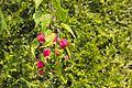 Unidentified plant - 10.jpg