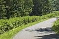 Urtica dioica (Grande ortie) 03.jpg