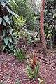 Vanilla plantation, Mucaweng, Lifou, New Caledonia, 2007 (1).JPG