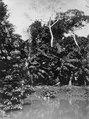 Vegetationen på Rio Sambus stränder vid medicinmannen Selimos hus. Urskog och bananodling - SMVK - 004104.tif