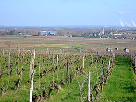 A general view of Souzay and its vineyards