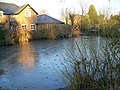 Village Pond, Cliddesden - geograph.org.uk - 693989.jpg