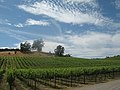 Vineyards in Russian River, Sonoma.jpg